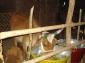 arymmahasammelan2012 aryaveerdalkaithal